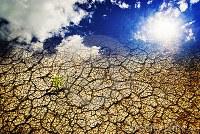 COMUNICAT DE PRESĂ - Recomandări pentru perioada cu temperaturi ridicate