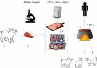 Trichineloza - informații utile